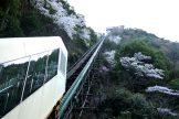 ホテル祖谷温泉の桜が咲きました♪
