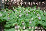【5月19日】クマガイソウ見学ツアー