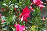 色んな種類の花が咲いています。