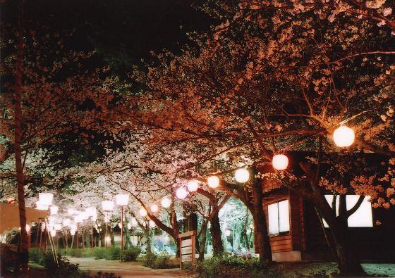 諏訪公園 桜まつり