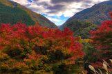 2019 祖谷渓の紅葉